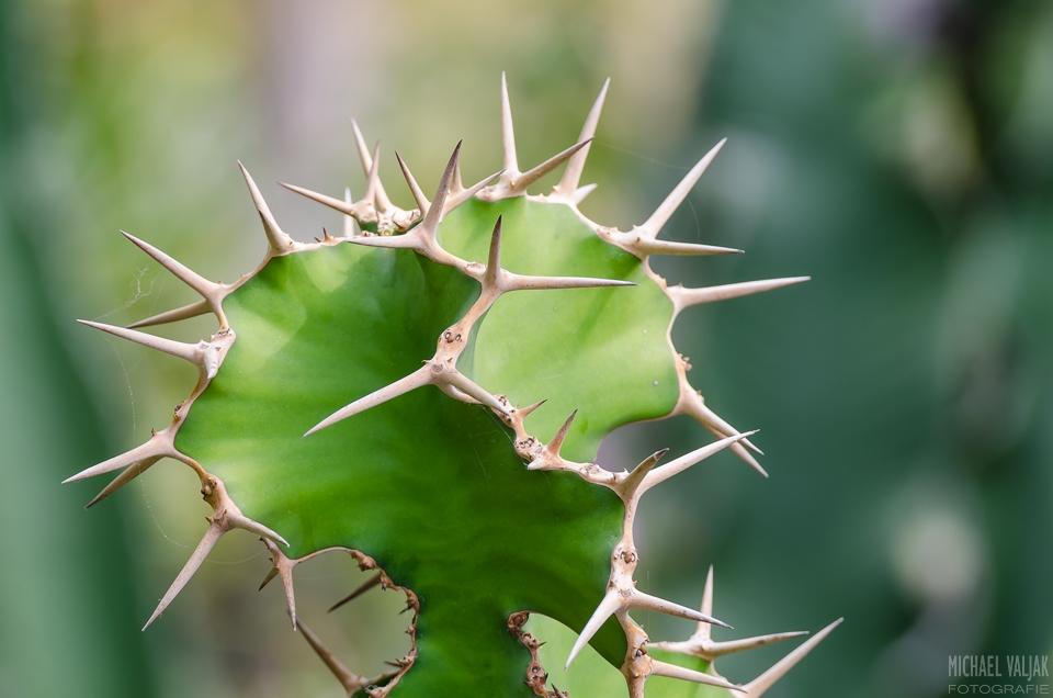 Mein kleiner grüner Kaktus…