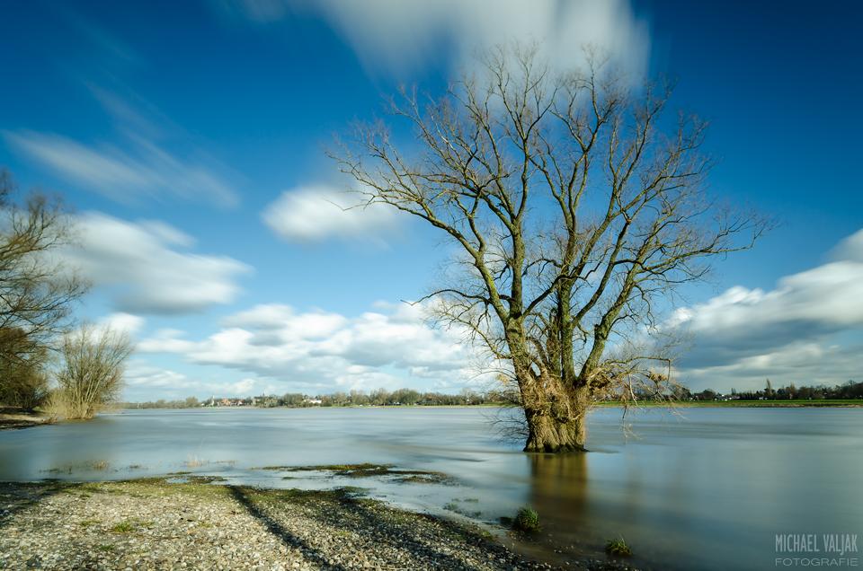 Baum im Rhein