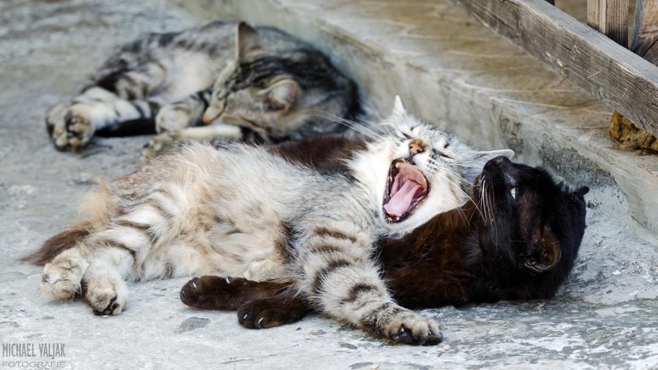 Müde Katzen