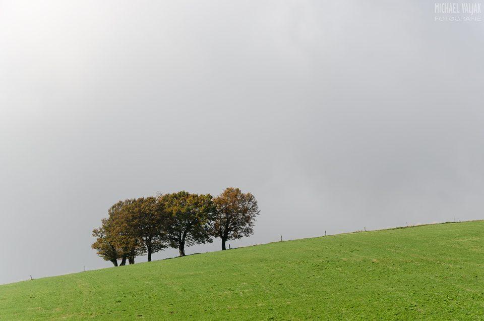 Bäume am Hang