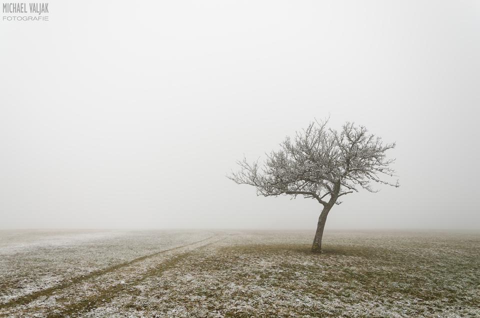 Winterliche Nebellandschaft