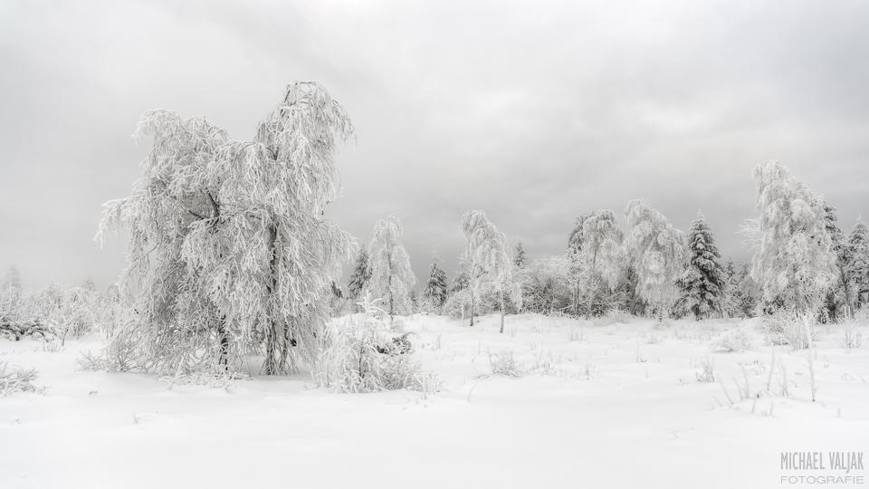 Eisbäume