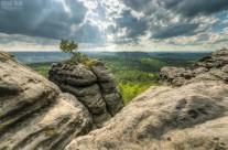Sächsische Schweiz – Einsame Kiefer auf dem Gorisch