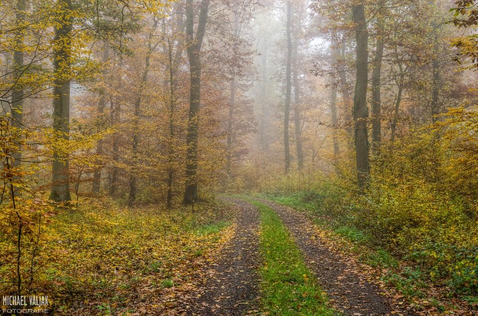 Herbstwald in der Eifel No.1