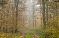 Herbstwald in der Eifel No.2