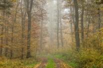 Herbstwald in der Eifel No.2