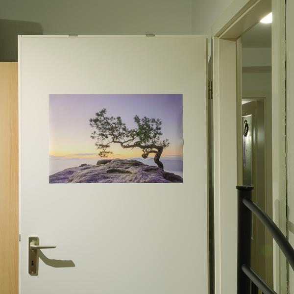 Elbsandsteingebirge Kiefer auf dem Lilienstein, Poster 60 x 40 cm