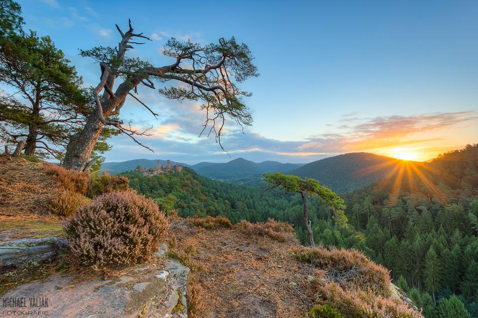 Tagesbeginn im Pfälzerwald