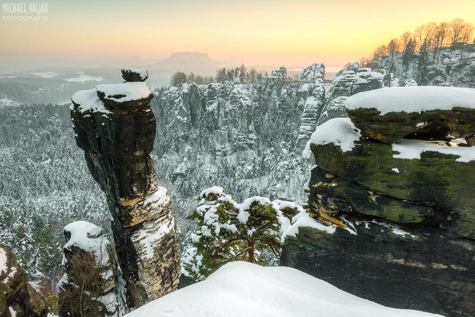 Wehlnadel im Winter