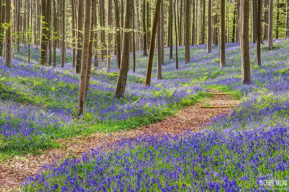 Im blauen Wald