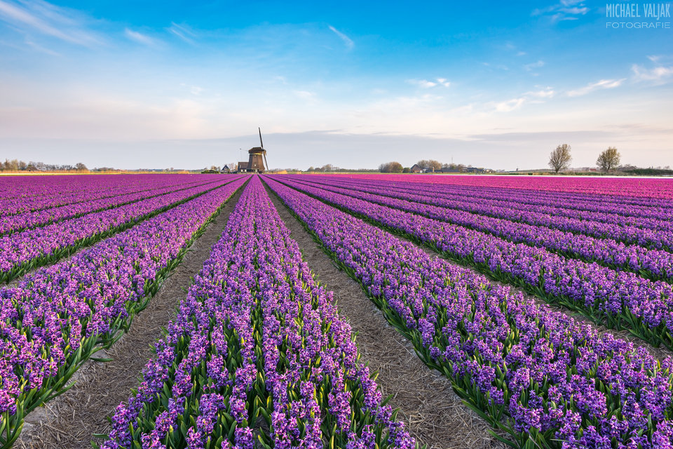 Frühling in Holland
