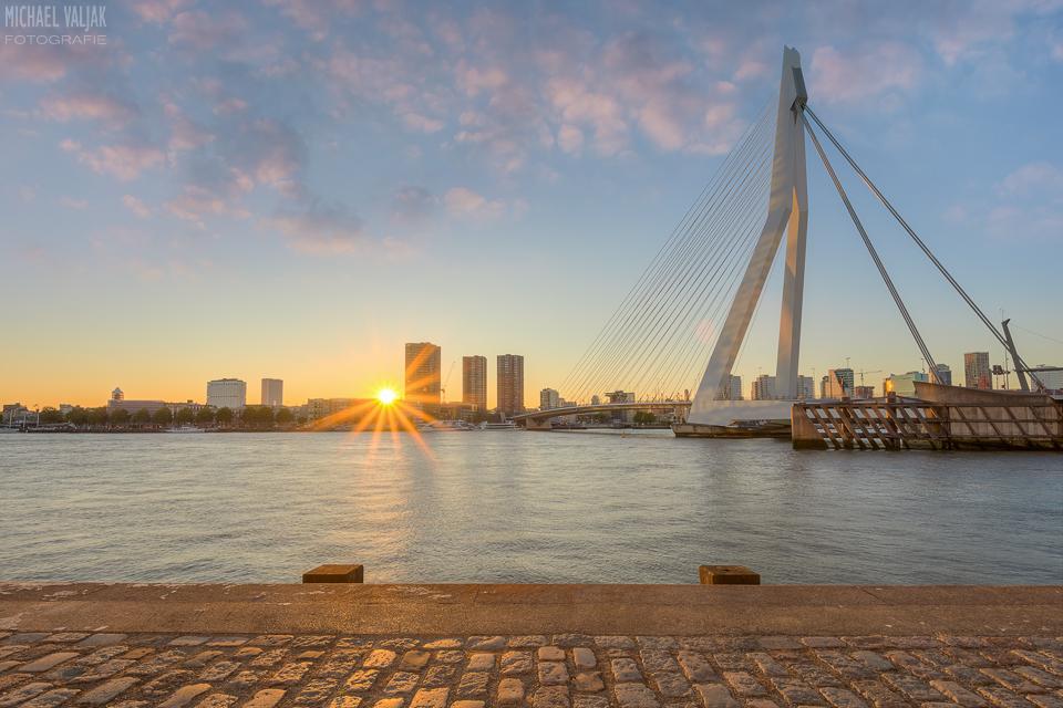 Ein Sonnenstern in Rotterdam