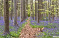 Frühling im Hallerbos