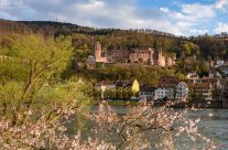 Frühling in Heidelberg