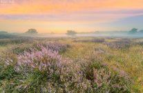 Heidelandschaft im Nebel kurz vor Sonnenaufgang