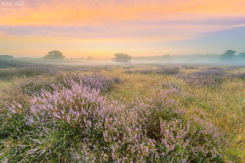 Heidelandschaft mit Nebel kurz vor Sonnenaufgang