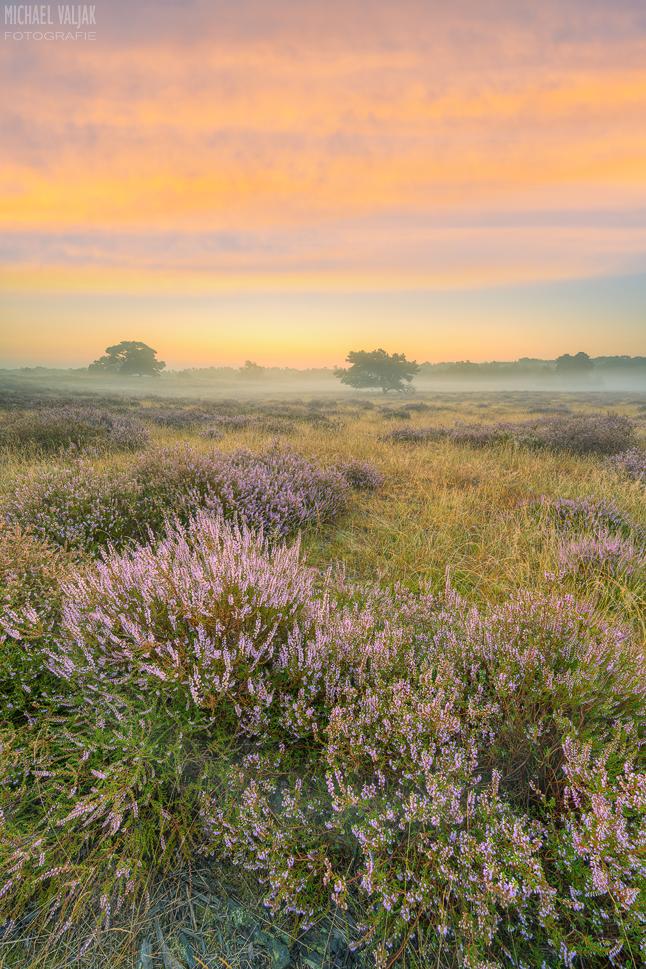 Kurz vor Sonnenaufgang in der Heide
