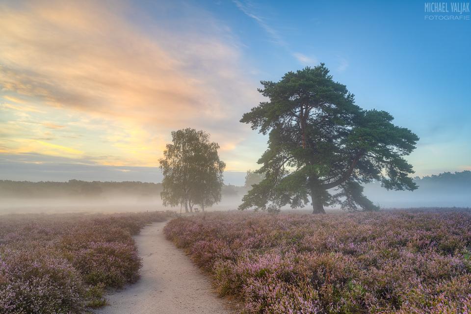 Morgennebel in der Westruper Heide