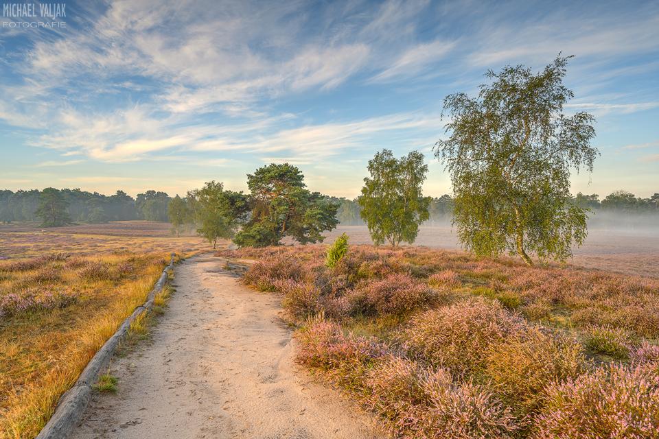 Morgensonne in der Heide
