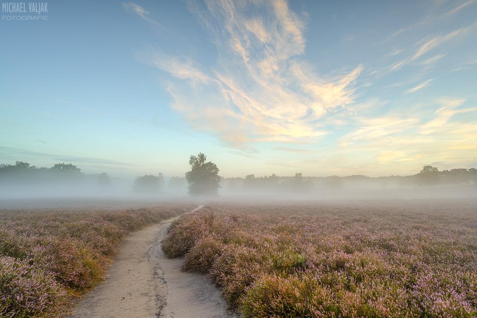 Morgenstimmung in der Westruper Heide