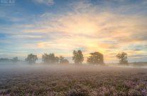 Nebliger Sonnenaufgang in der Westruper Heide