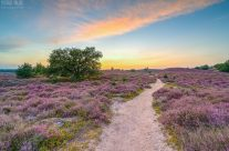 Weg durch die Heide
