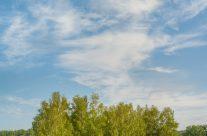 Wolken und Bäume in der Heidelandschaft