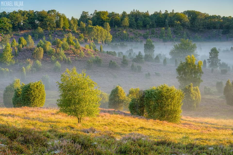 Morgens im Totengrund in der Lüneburger Heide