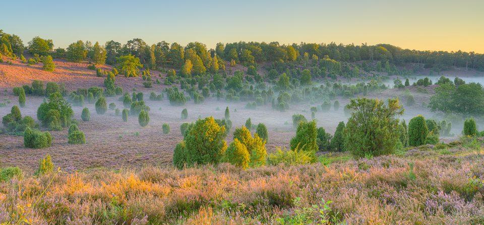 Morgens in der Lüneburger Heide