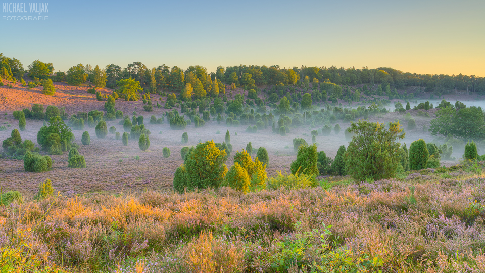 Morgens in der Lüneburger Heide