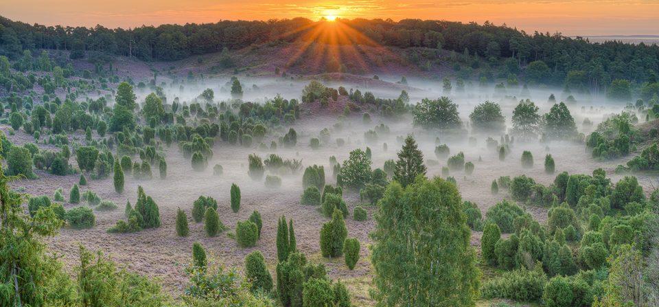 Sonnenaufgang über dem Totengrund in der Lüneburger Heide