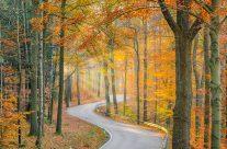 Straße durch den Herbstwald