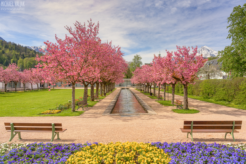 Kirschblüte im Kurpark Berchtesgaden